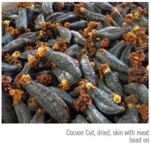 Sea Cucumber - Cocoon Cut
